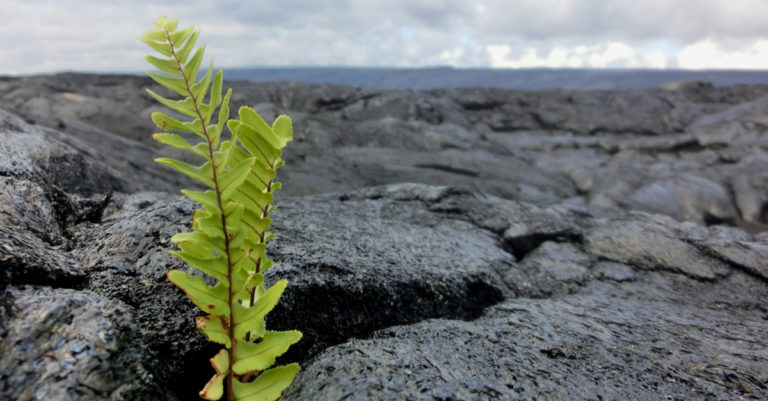 survive to thrive represented by growing plant in rock face